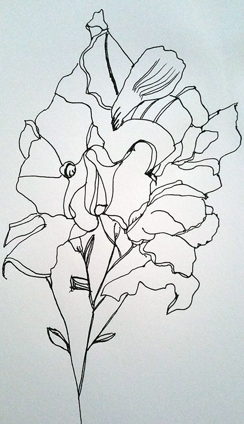 windowsill-flowers-ink-drawing