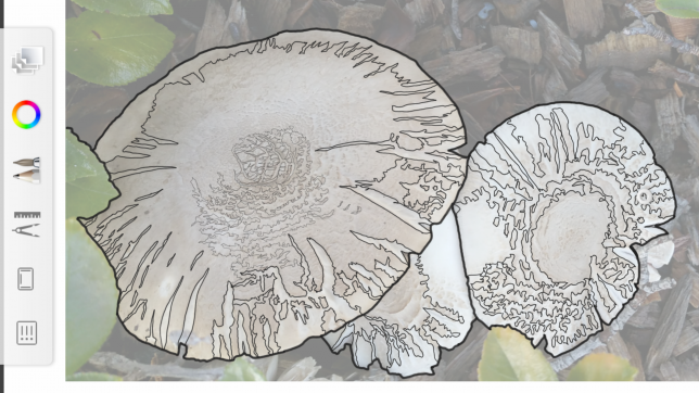 Continuing to fill in the smaller mushrooms while using the original image as a guideline.