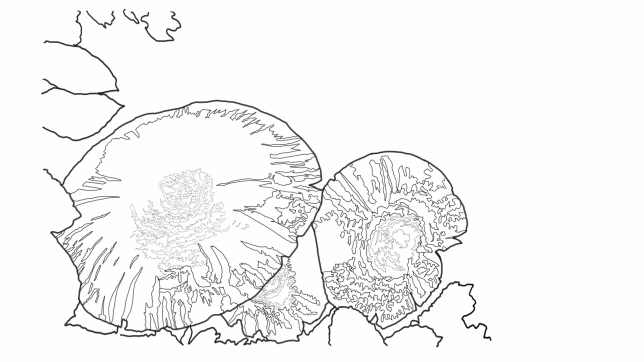 The current line art, I'm mostly finalized -- all the major shapes are represented with sufficient line detail.
