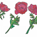 Beginning the Year + Three Roses (digital art)
