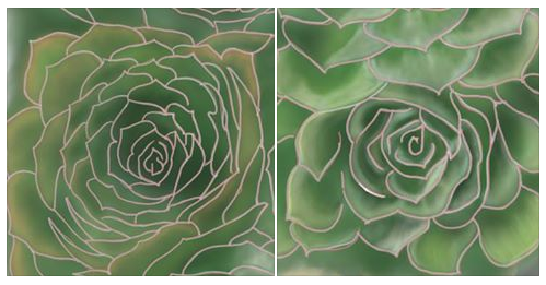 Six Succulents - v.2 Side-by-Side Plants