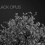 """A Black Opus,"" in Cleaver #19"